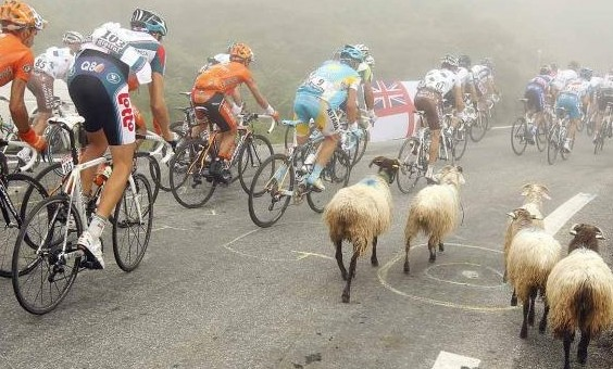 Pock-marked tarmac, low clouds and rogue sheep caused a four-man breakaway on the Gap Road.